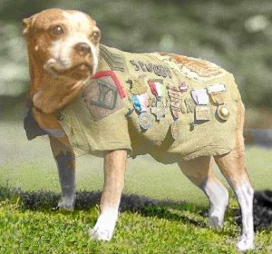 Sgt. Stubby wearing his famous medal-festooned coat